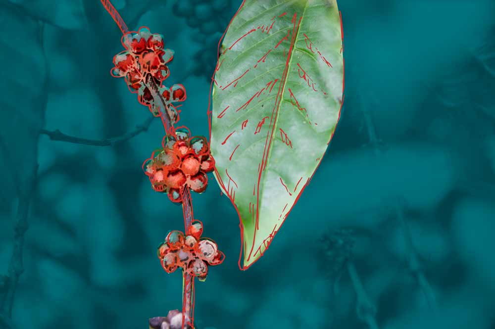 tree leaf and little berries