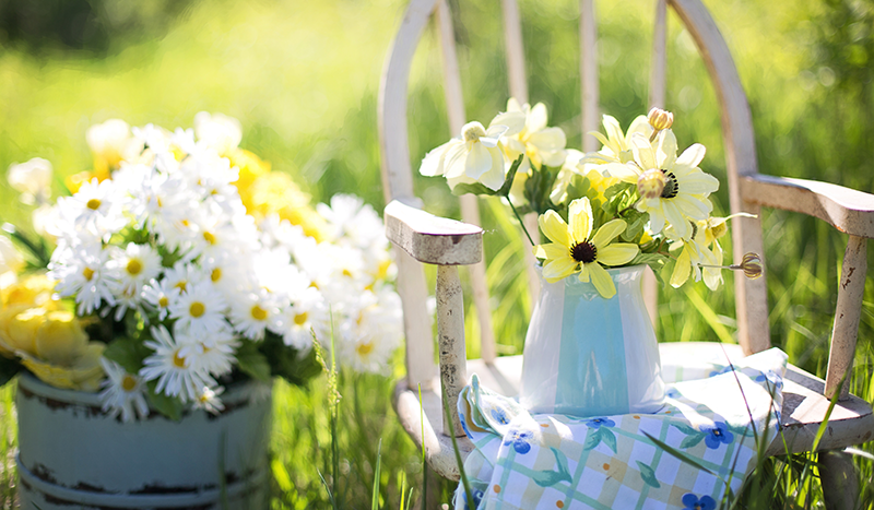 daisies, green grass and chair with daisies in a white caraf