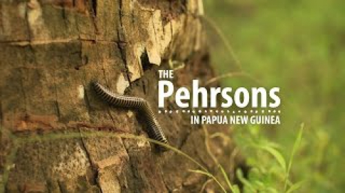 The Pehrsons in Papua New Guinea